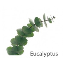 Aroma Eucalyptus 1 litre